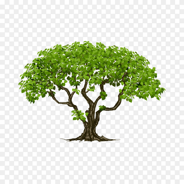 Hand drawn tree with green leaves on transparent background PNG