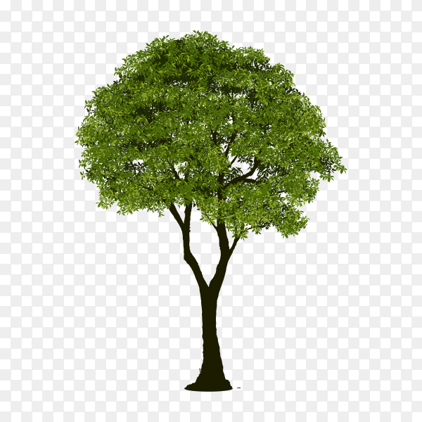 Illustration of green tree isolated premium vector PNG