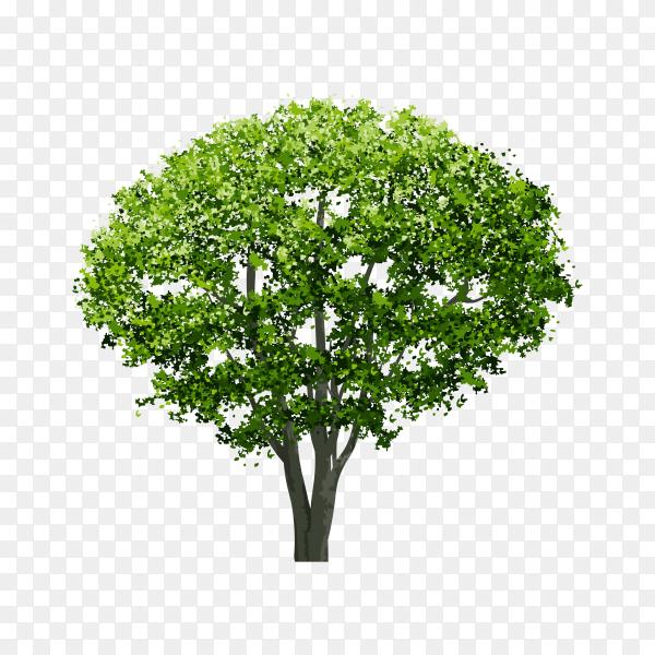Illustration of green tree on transparent background PNG