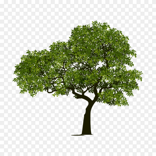 Illustration of tree with green leaves on transparent background PNG