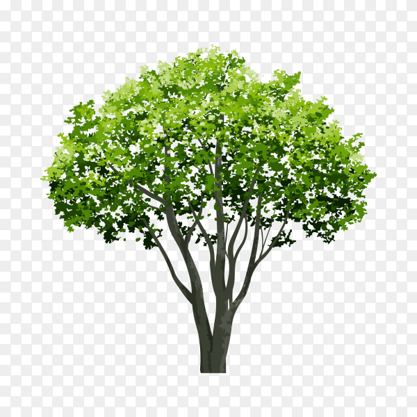 Illustration realistic tree isolated on transparent background PNG