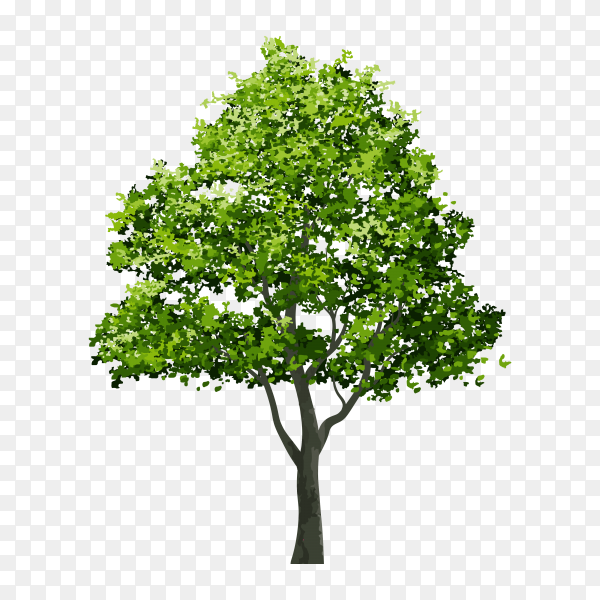 Isolated green tree isolated on transparent PNG