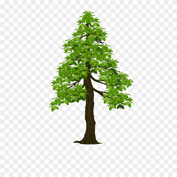 Isolated green tree isolated on transparent background PNG