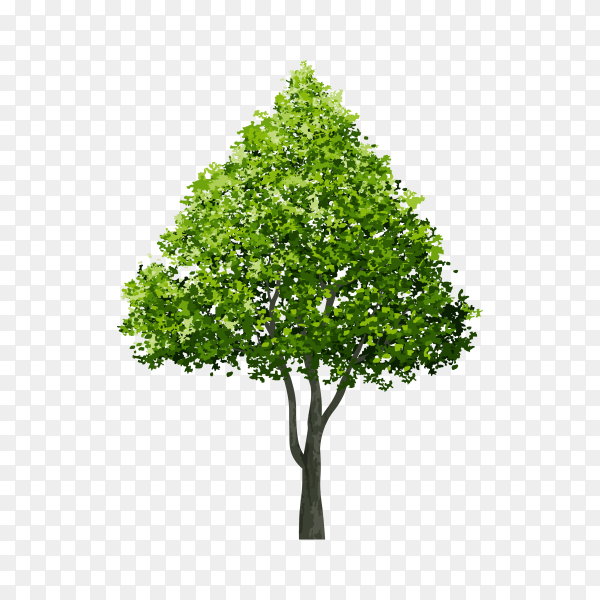 Isolated green tree isolated premium vector PNG