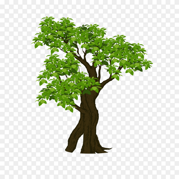 Isolated tree green premium vector PNG