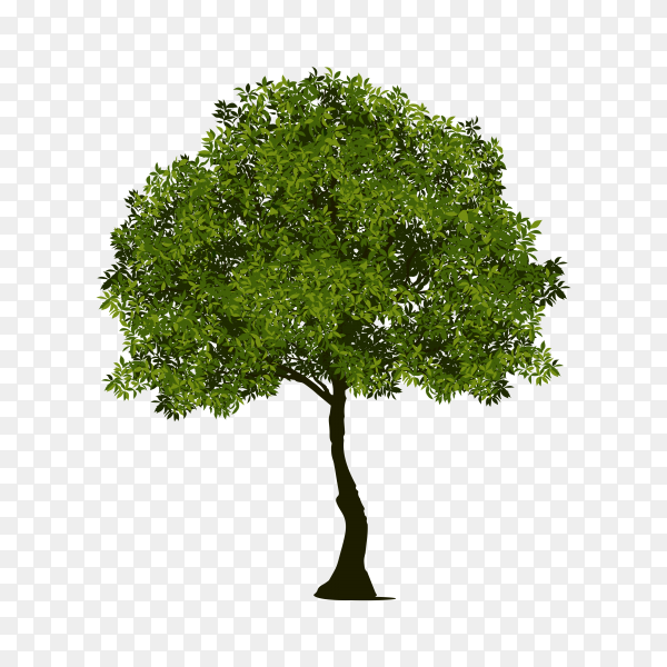 Isolated tree with green leaf on transparent PNG