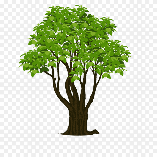 Realistic tree isolated on transparent PNG