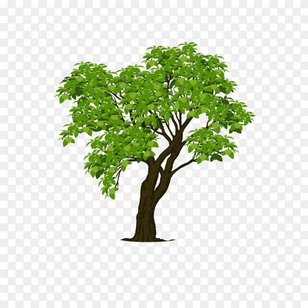 Realistic tree isolated on transparent background PNG