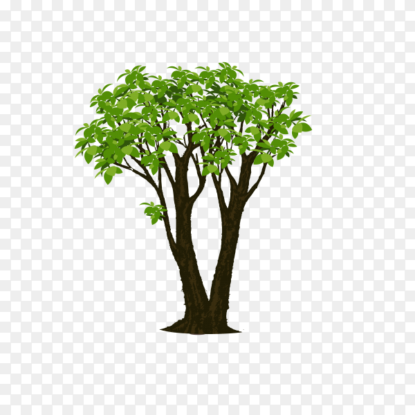 The brown tree with branch and green leaves on transparent background PNG