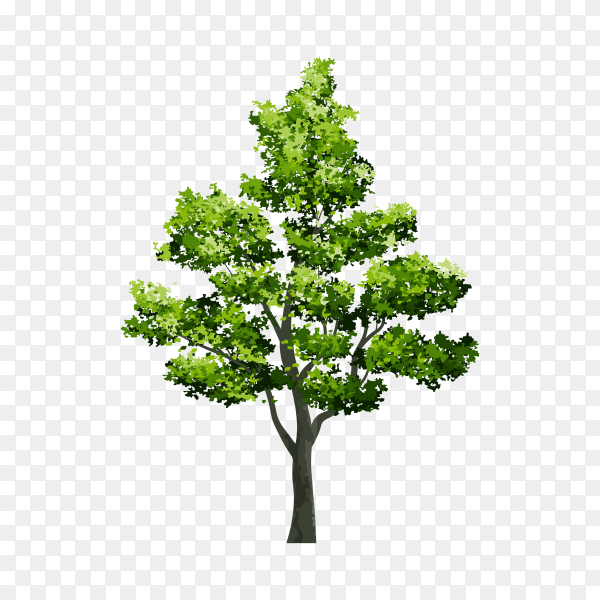 Tree isolated on transparent PNG