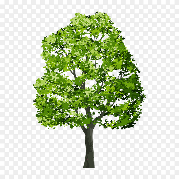 Tree isolated premium vector PNG