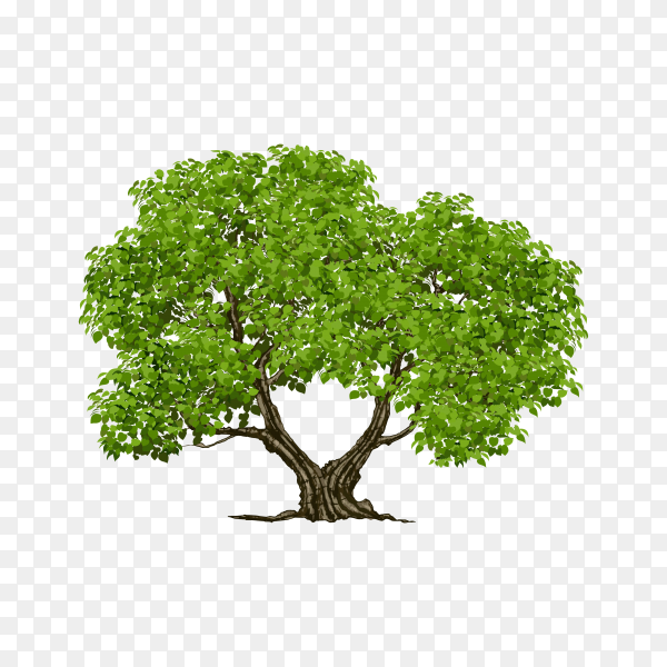 Tree on transparent background PNG