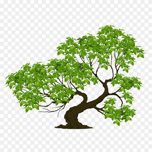 Tree with branch and green leaves isolated on transparent PNG
