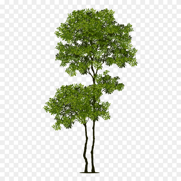 Tree with branch and green leaves on transparent background PNG