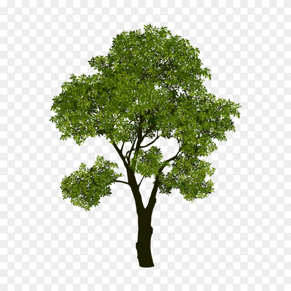 Tree with branch and green leaves premium vector PNG