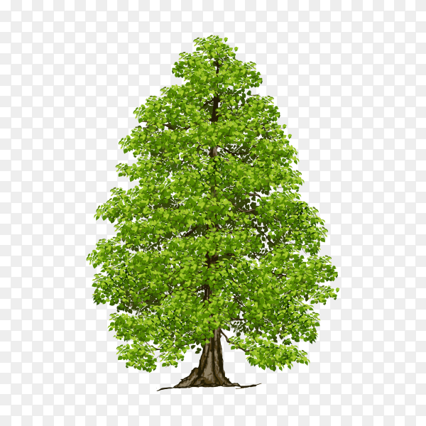 Tree with green leaves illustration on transparent PNG