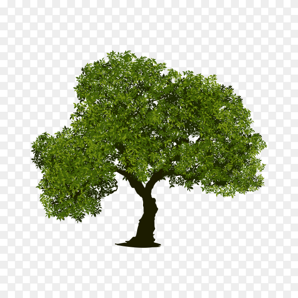 Tree with green leaves illustration on transparent background PNG