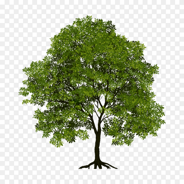 Tree with green leaves isolated on transparent PNG