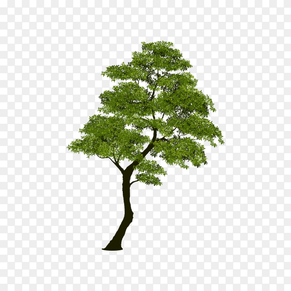 Tree with green leaves on transparent background PNG