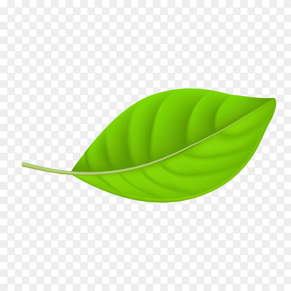 Abstract green leaf on transparent PNG