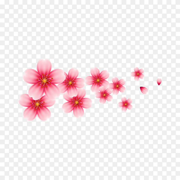 Cherry blossom isolated on transparent background PNG