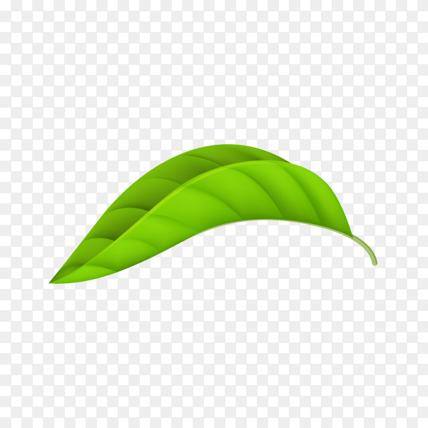 Green leaf isolated on transparent background PNG