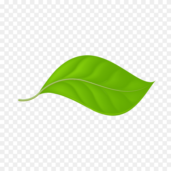 Green leaf on transparent background PNG