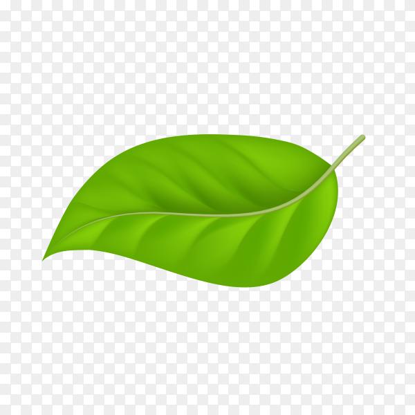 Green leaf premium vector PNG