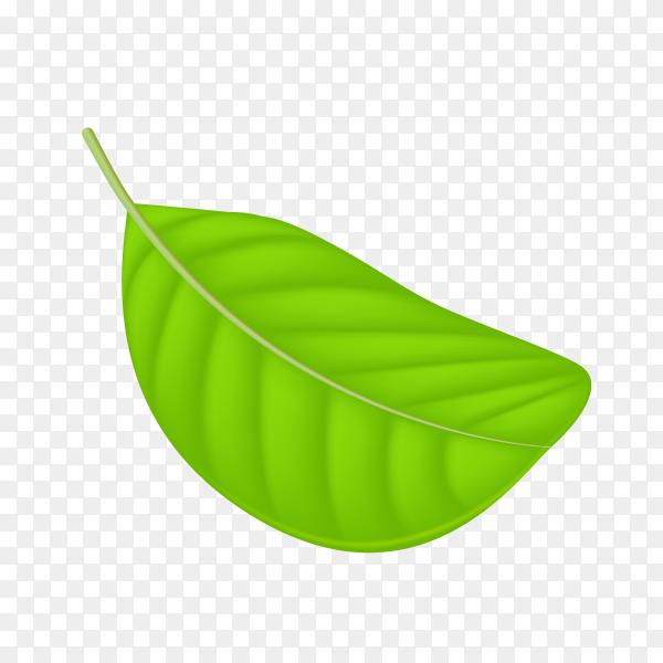Illustration of abstract green leaf on transparent background PNG