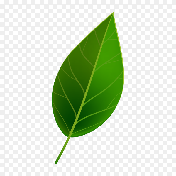 Realistic Green leaf isolated premium vector PNG
