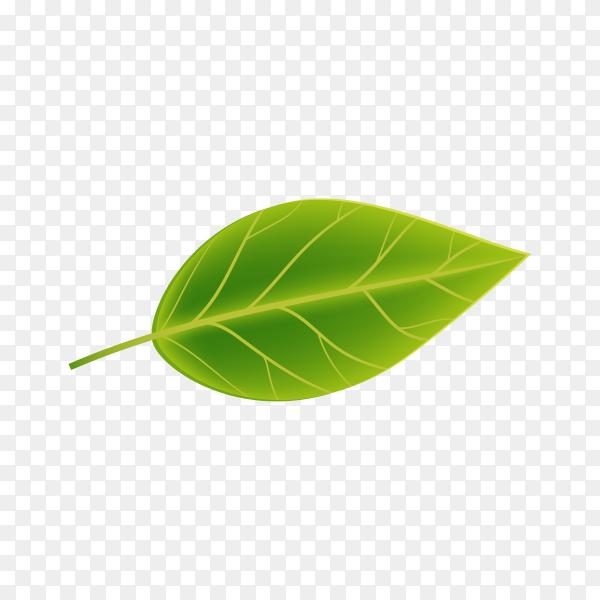 Realistic Green leaf premium vector PNG