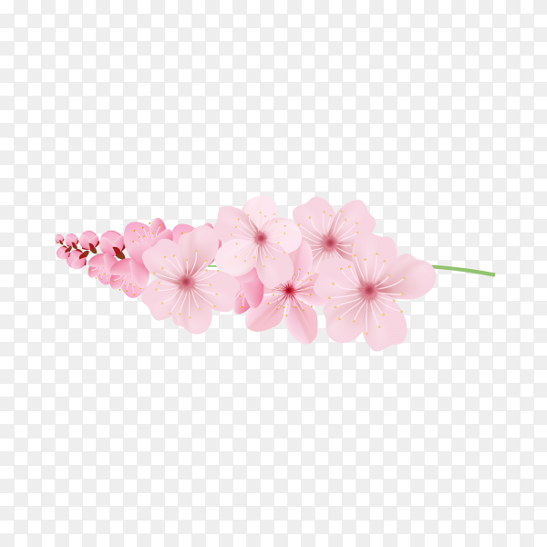 Realistic sakura branch tree mock up illustration on transparent background PNG