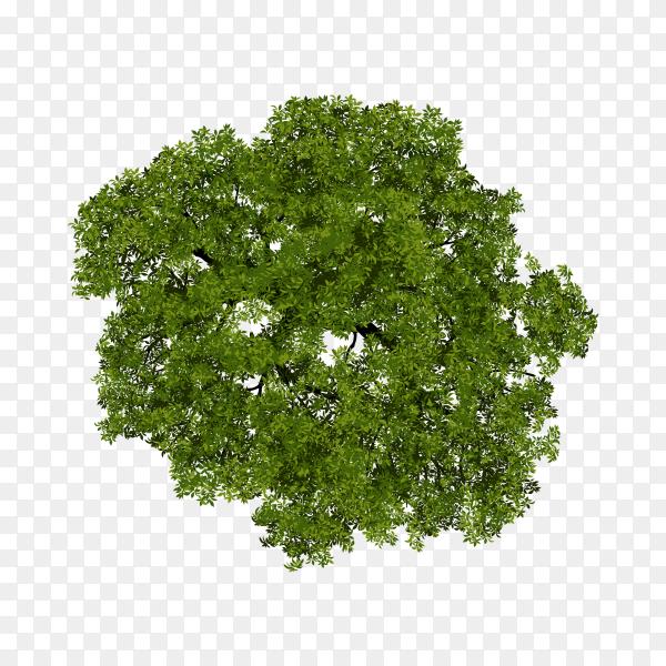 Tree top view for landscape illustration Premium vector PNG