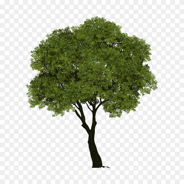 Tree with green leaves isolated on transparent background PNG