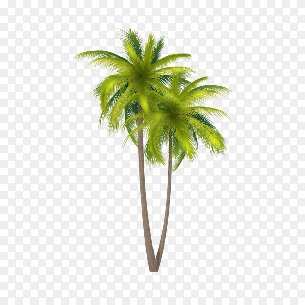 Tropical palm tree with coconuts symbol isolated on transparent background PNG
