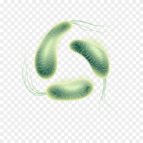 Realistic microscopic virus and bacteria on transparent PNG