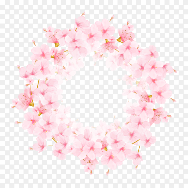 Frame with the cherry blossoms.Watercolor illustration on transparent background PNG