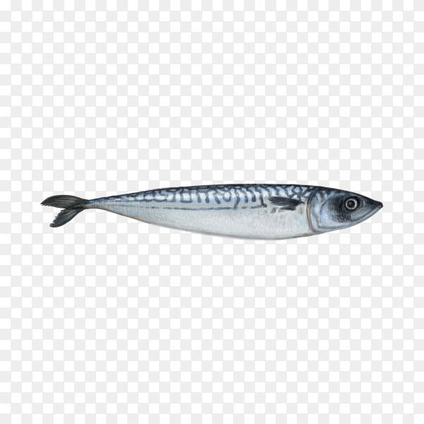 Fresh fish illustration on transparent background PNG