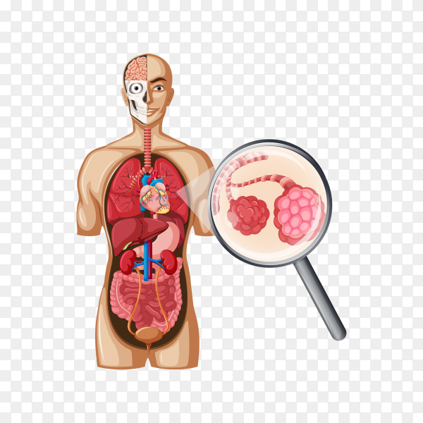 Illustration of human body with Cancer lung on transparent background PNG