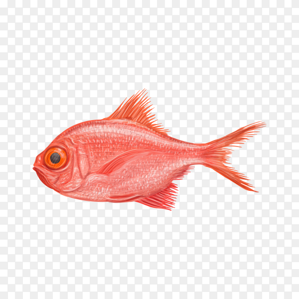 Red fresh fish on transparent background PNG