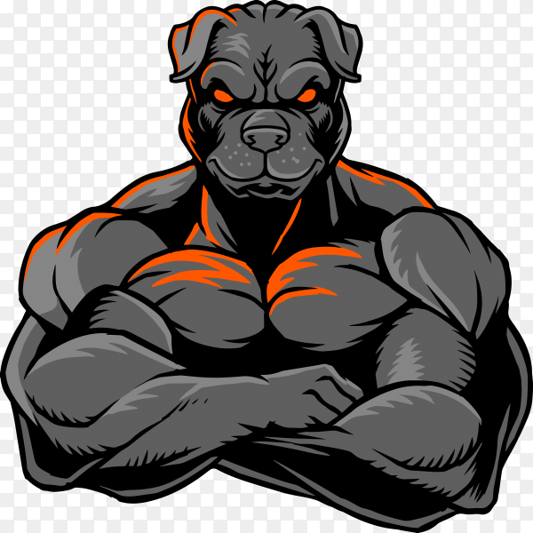 Strong bulldog whose body is covered with big muscles on transparent background PNG