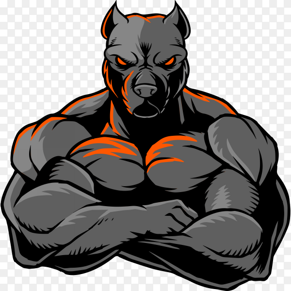 The illustration shows a strong Pit Bull whose body is covered with big muscles on transparent background PNG