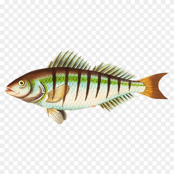 Hand drawn fish illustration on transparent background PNG