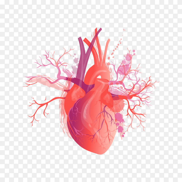 Realistic human heart on transparent background PNG